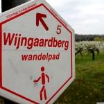 04 - Wandel in wijngaard
